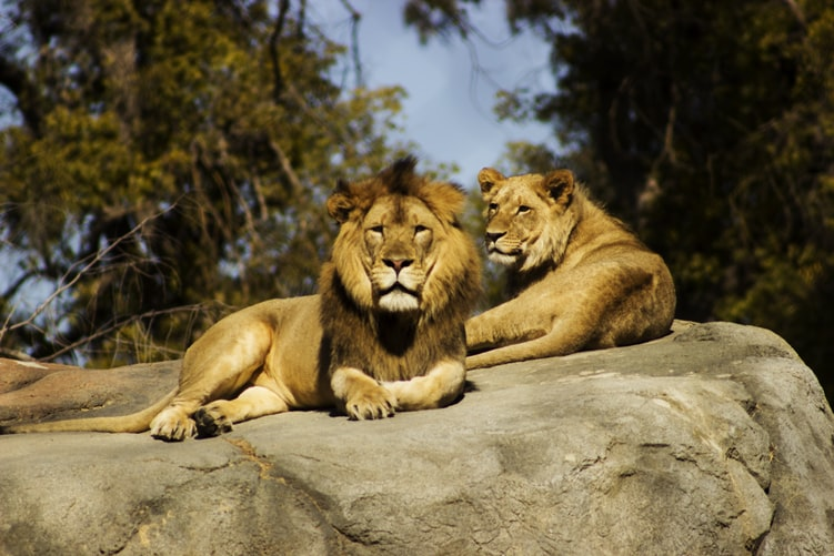 Tips for a Great Day at African Lion Safari